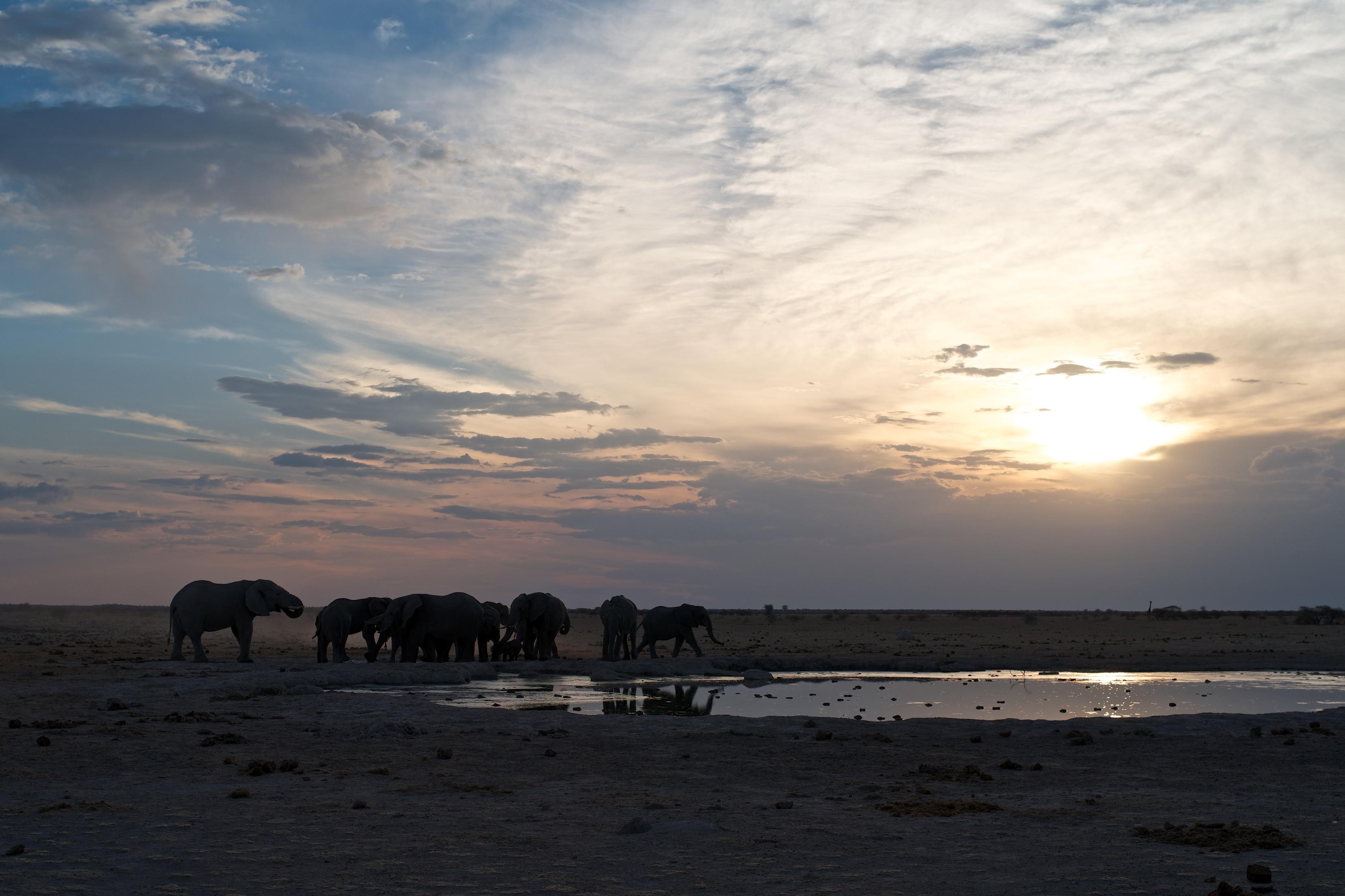 Nxai Pan - Elephants