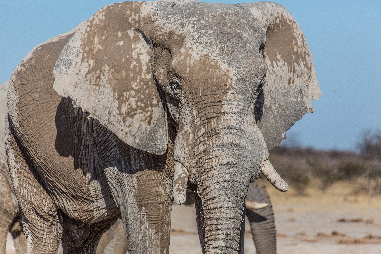 TAbt.Cat1.Elephant.NxaiPan